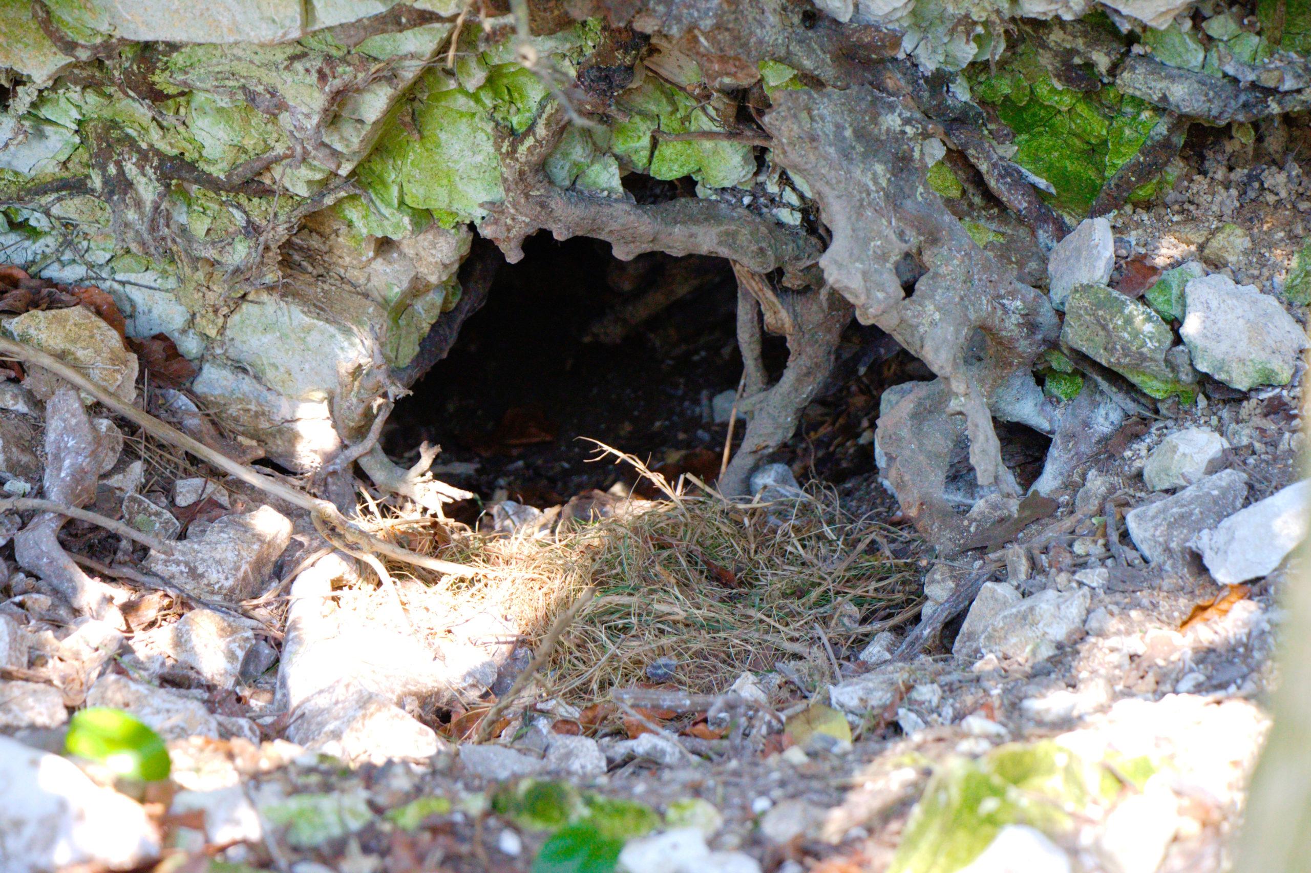 Badger sett - Bovine TB