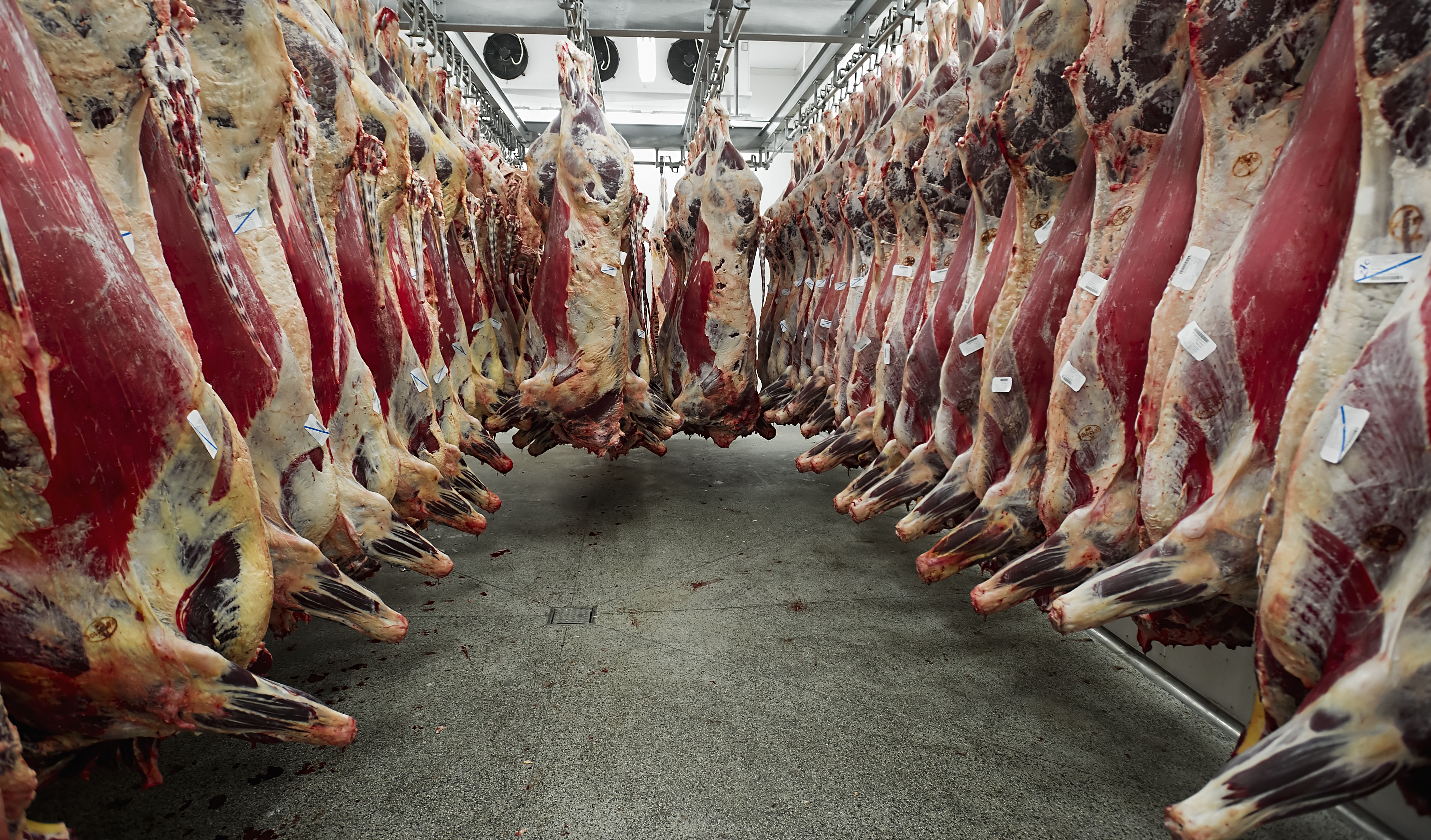Meat carcasses - Bovine TB