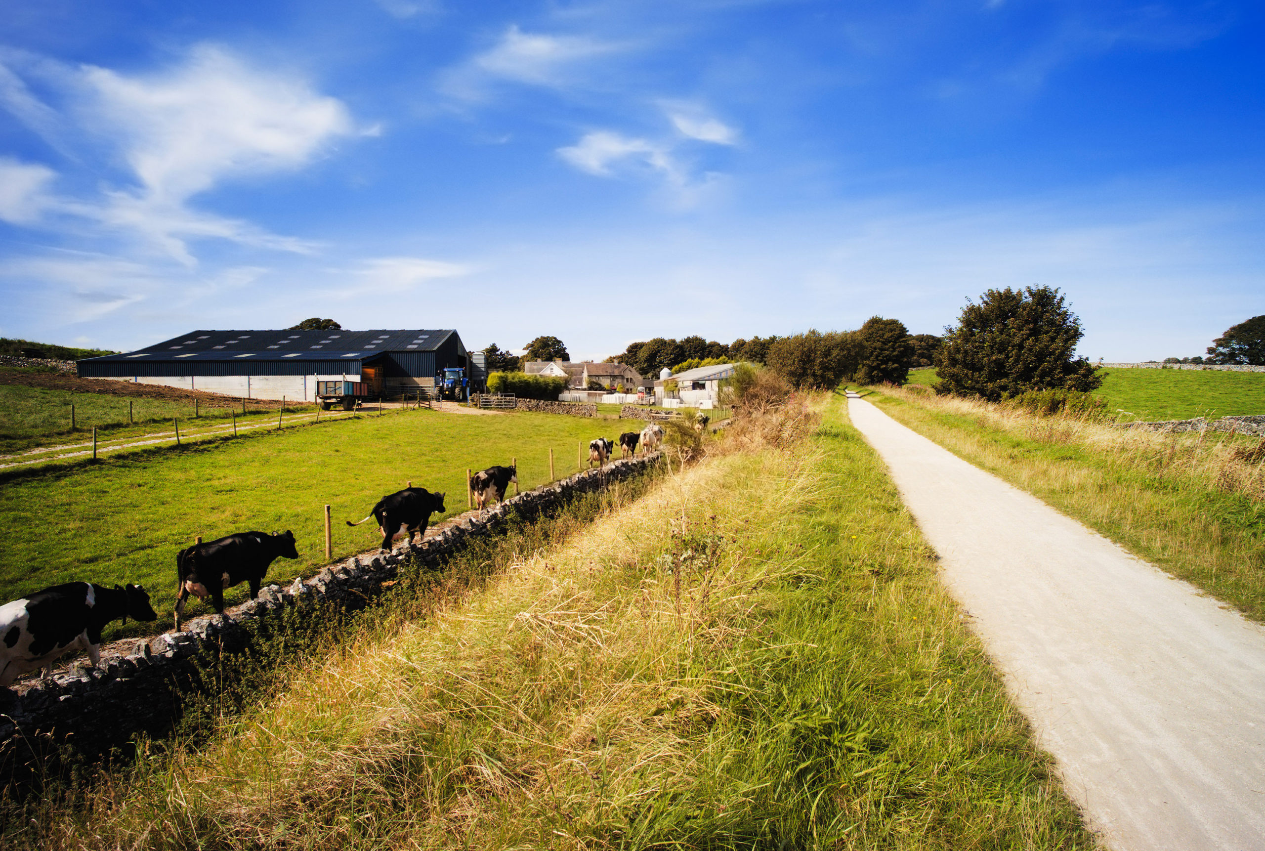 Sunny farm road - TB Hub