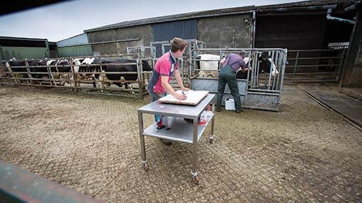 TB testing on a farm - TB hub