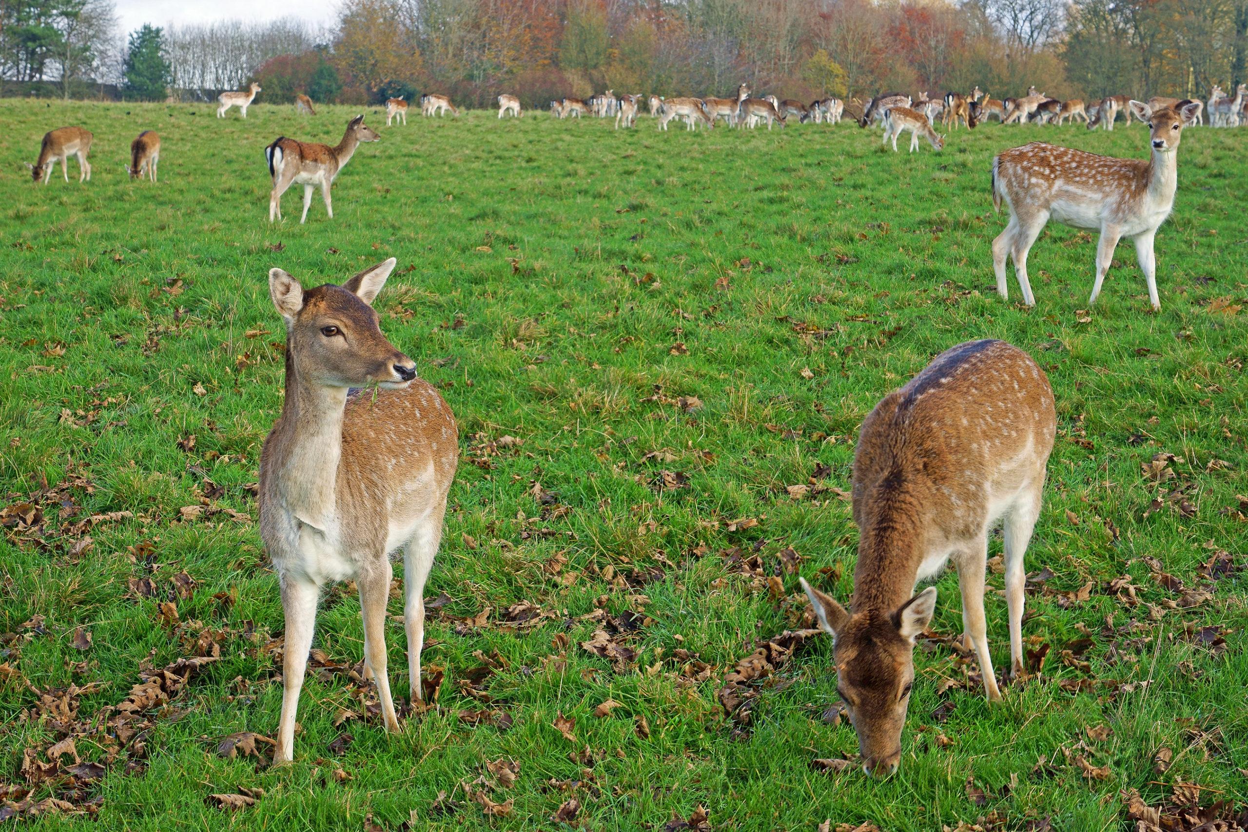 Deer - TB Hub