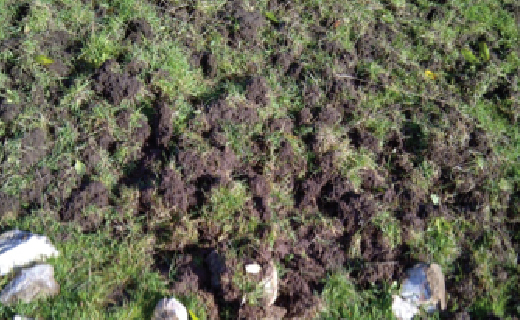 Grass and droppings - Bovine TB