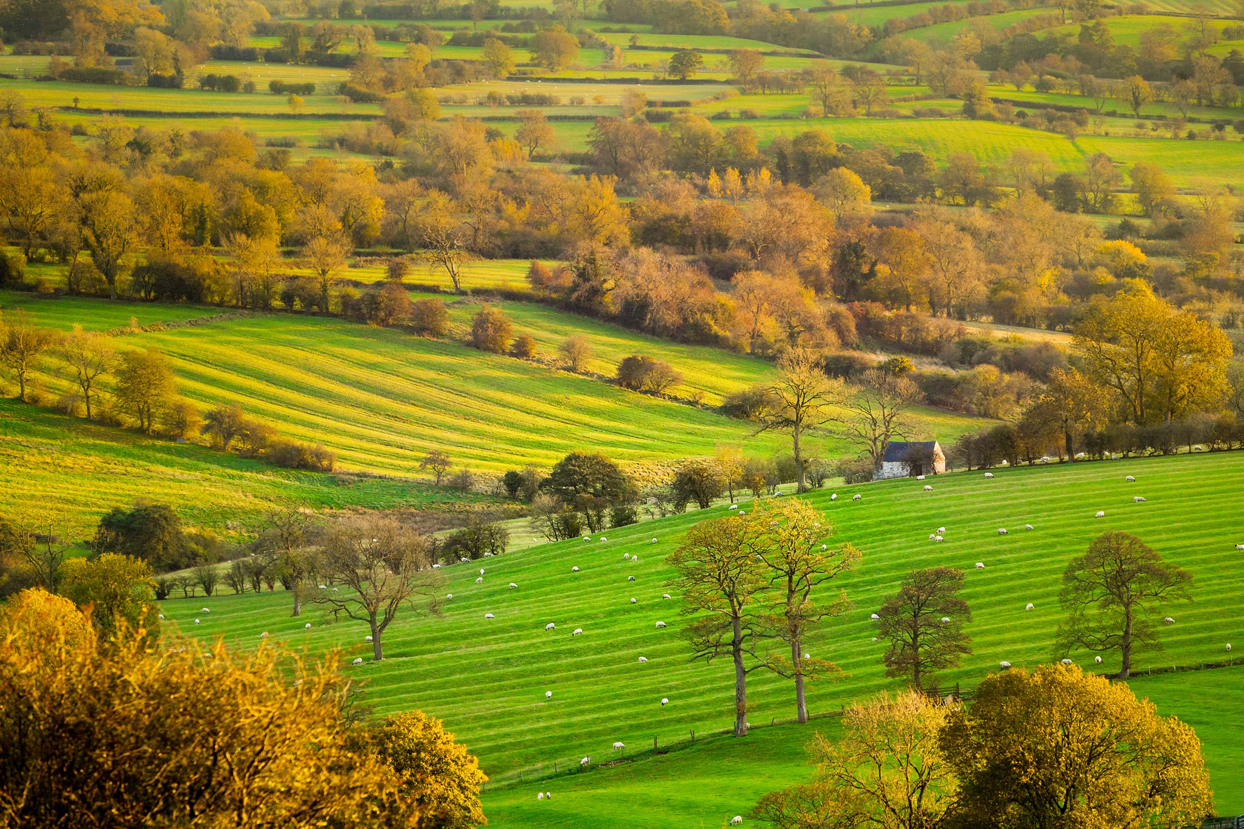 British countryside on an autumnal day - Bovine TB