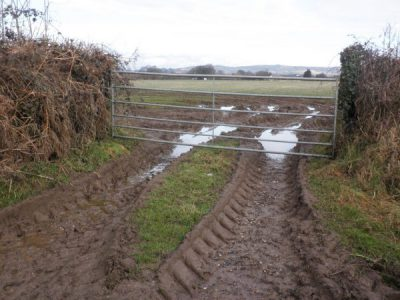 Muddy tractor track showing access point for badgers under a gate - Bovine TB
