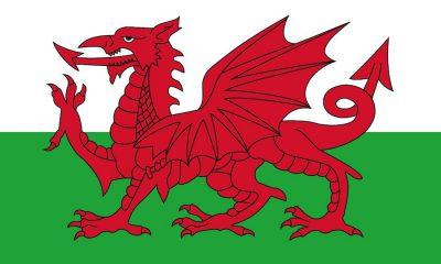 Wales Flag - Bovine TB